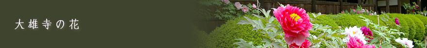 大雄寺の花